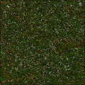 Forest Meadow Grass 1.0