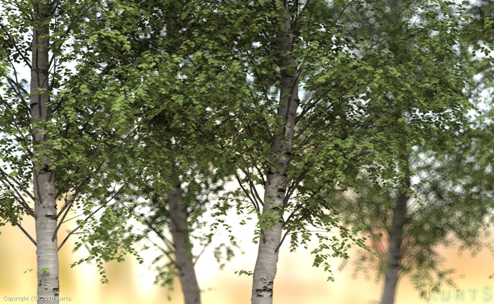 birch bokeh by kurts